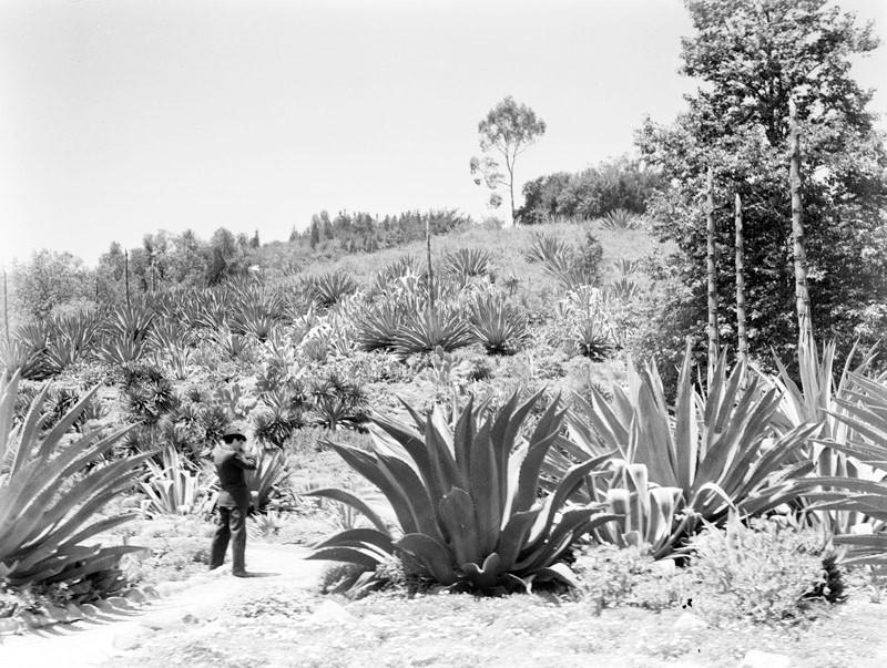 Kellogg Cactus Garden