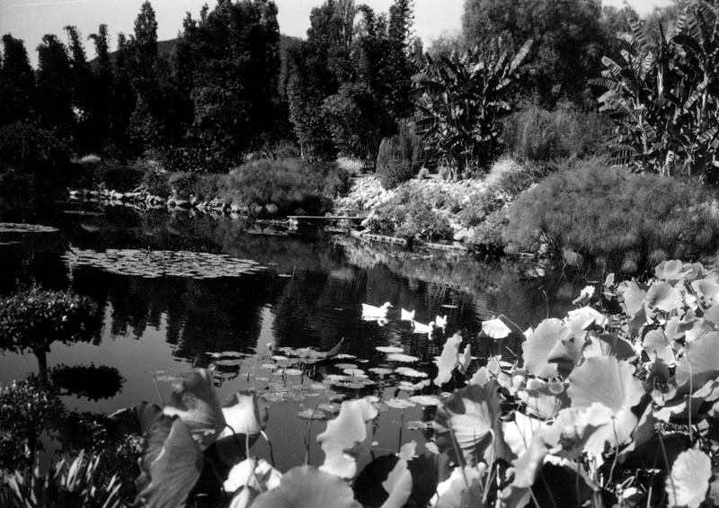 Kellogg Garden Duck Pond
