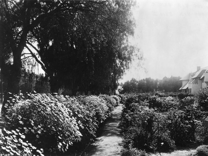 de Longpre Rose Garden
