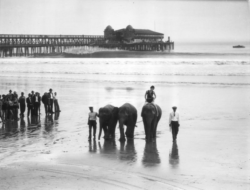 00071558 elephants at Long Beach pier