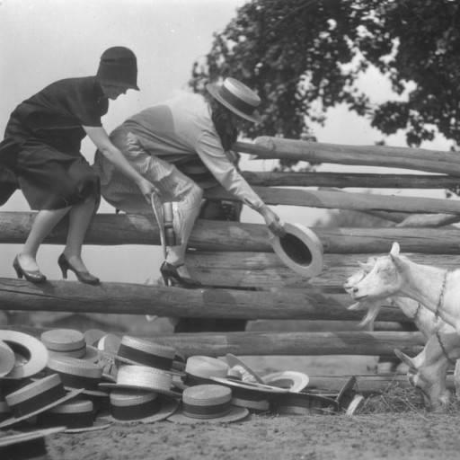 goats eating hats